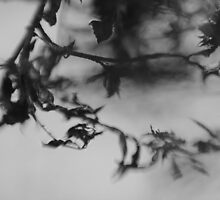 Tree In Black And White by Candy23