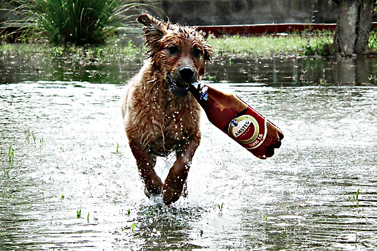 Any one for Beer ? by Berns