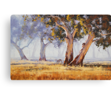 Kangaroo Grazing Canvas Print