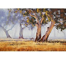 Kangaroo Grazing Photographic Print