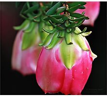 Drooping Red Photographic Print