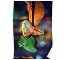 Colourful Autumn Leaf Poster