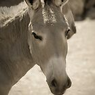 Donkey is smiling by Megas