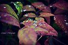Grandma's Leaf 2  by Zoe Harris