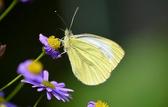 Yellow beauty by Nicole W.