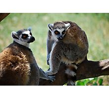 Funny animals Photographic Print