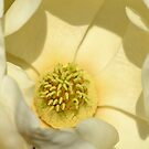 First magnolia bloom this year by Nicole W.