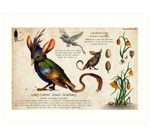 The Jewel Starling Art Print