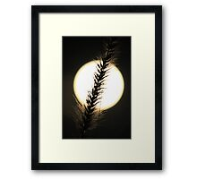 ~ WINTER MOON ~ Framed Print