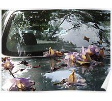 Blossoms On Car Finish - Flores Sobre La Laca Del Coche Poster