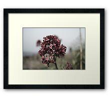 The Dull Flower Framed Print