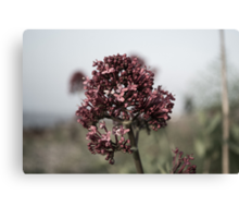 The Dull Flower Canvas Print