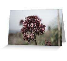 The Dull Flower Greeting Card