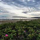 Wellfleet by Jamie Lee