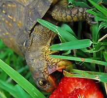 Turtle by Gow19