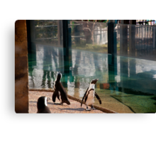 Penguins everwhere Canvas Print