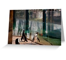 Penguins everwhere Greeting Card