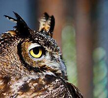 Eye of a predator by Guatemwc