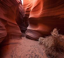 Coils of Rattlesnake Canyon by Owed to Nature