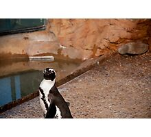 Penguin Stare Down Photographic Print
