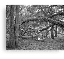 Oak and Resurrection Ferns. Three Lakes W.M.A. Canvas Print