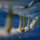 Legs 11..... by shellfish