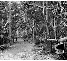 Young Boar. Highlands Hammock S.P. Photographic Print
