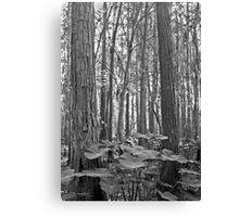 Oak and Caladium. Shingle Creek. Canvas Print