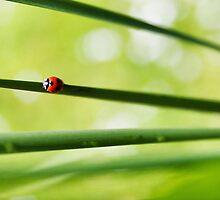 Ladybug by martijndevalk