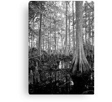 Cypress Swamp. Econlockhatchee River. Canvas Print