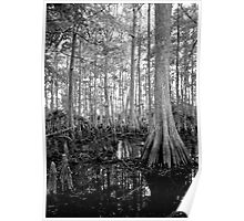 Cypress Swamp. Econlockhatchee River. Poster