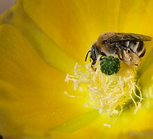 Gathering pollen by Dennis Reagan
