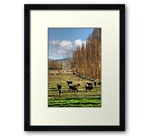A Field of Striped Shadows Framed Print