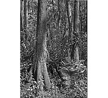 Leather Fern Portrait #2. Shingle Creek. Photographic Print