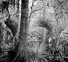 Oak and Palm. Green Swamp W.M.A. by chris kusik