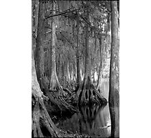 Shoreline. Shingle Creek. Photographic Print