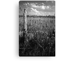 Pine Beetle Cemetery #2. Lake Lizzie Preserve. Canvas Print
