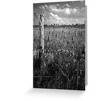 Pine Beetle Cemetery #2. Lake Lizzie Preserve. Greeting Card