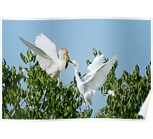 Cattle Egret and Chicks Poster