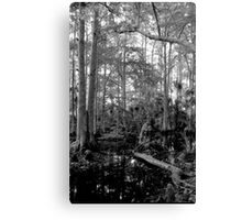 Cypress Swamp #2. Green Swamp W.M.A. Canvas Print