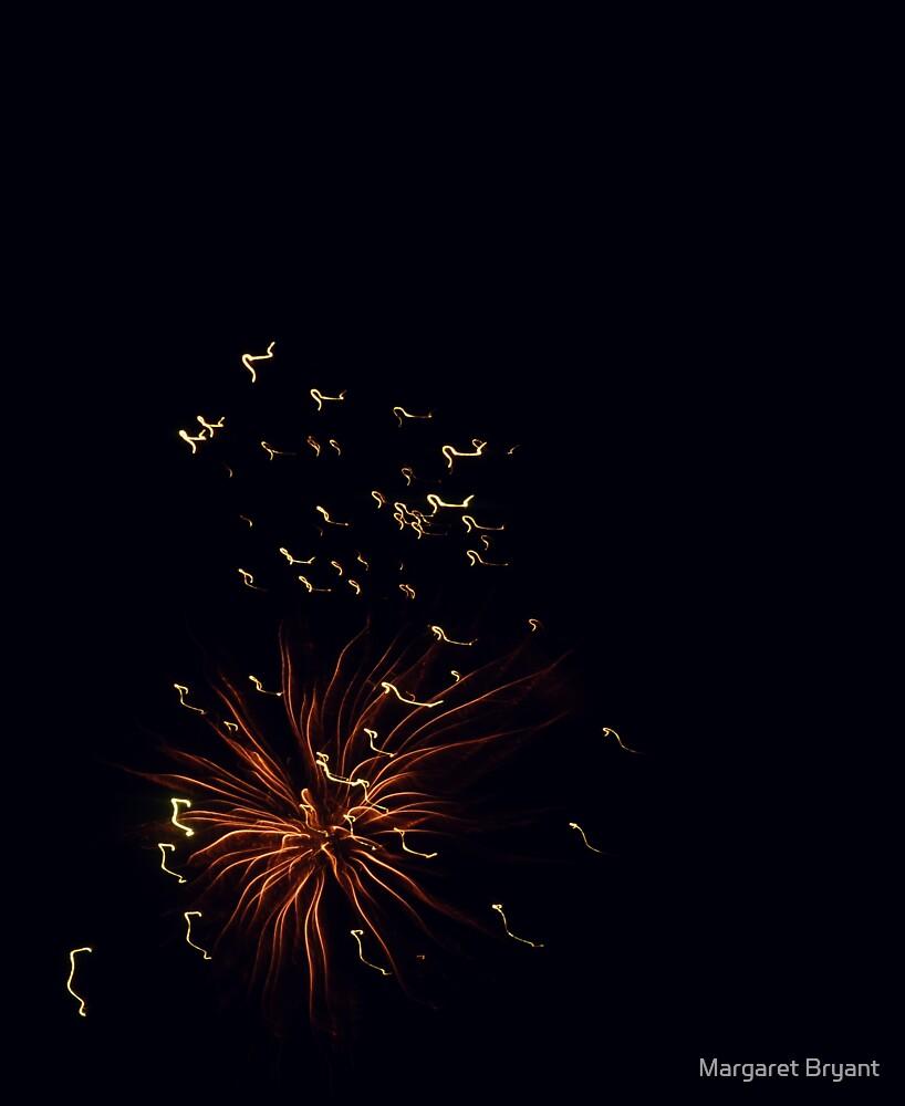 Firework Anemone by Margaret Bryant