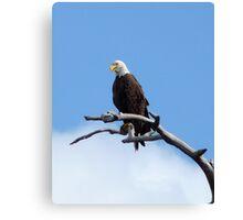 Bald Eagle. Shingle Creek  Canvas Print