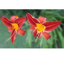 Two Pretty Daylilies Photographic Print
