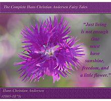 Swirls of Cheerfulness ~ Bachelor's Button Photographic Print