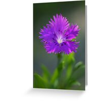 In Remembrance ~ Bluet de France Greeting Card