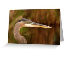 Great Blue Heron Portrait. Blue Cypress Lake. Greeting Card