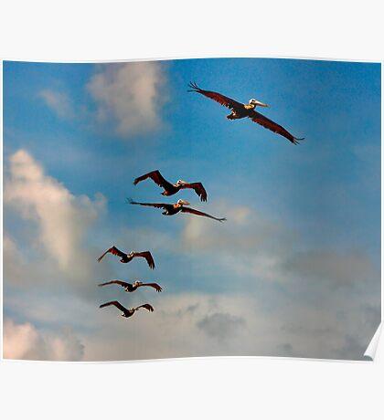 Pelicans in Flight. Melbourne Shores Florida. Poster
