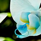 Blue Orchid ~ Amongst the others by DesignsbyiRis