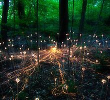 Light Forest by David Lamb