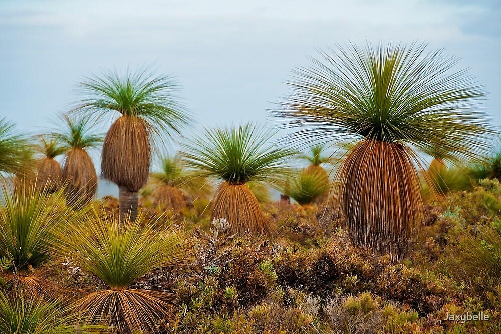 110619 Lesueur National Park Grasstrees 2 by Jaxybelle
